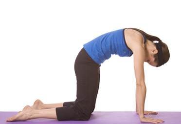 how to do yoga marjaryasana pose / yoga marjaryasana pose